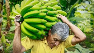 Photo of Hasta el 22 de julio productores podrán inscribirse para acceder al incentivo de comercialización