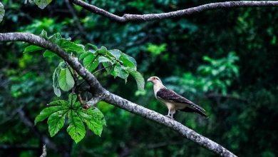 Photo of Avanza el proyecto ecoturístico Parque de las Aves, uno de los más importantes de su tipo en Villavicencio